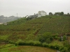 1_pepe-galan_transferencia-1-desprazamento-a-paisaxe-reinventada-obradoiros-taller-de-land-art-2005_pazo-de-marinan-deputacion-da-coruna_f01_-copia